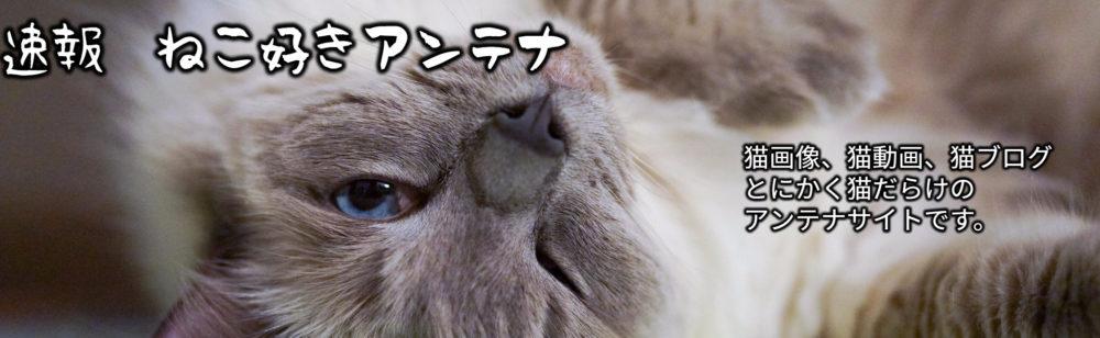 猫好きさんだけの猫まとめ